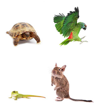 exotic pet euthanasia Paradise Valley